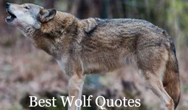 Wolf Quotes On Love, Short, Future Man, Family, Tattoo, Pulp Fiction