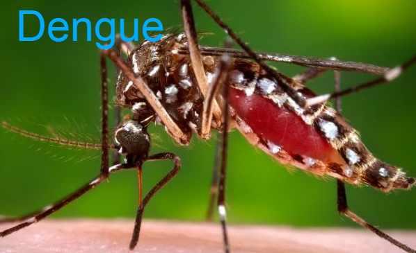Dengue Symptoms, Cause, Treatment, Prevention